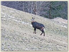 01 Bei Scuntras, 1265 m.ü.M. fast Schneefrei im Januar