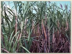 19 Die Verstaatlichung der Zuckerindustrie ist konsequent.