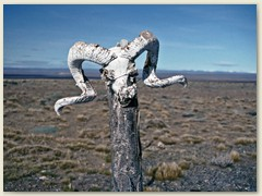 06 Die Pampa, eine grasbewachsene Ebene