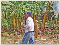 36 Ein Arbeiter in einer Bananenplantage