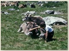 16 Bei der Alp Surovel. Eine nachhaltige Beweidung lässt die Berglandschaft nicht einwachsen