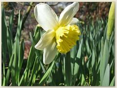 19 Ende April, auch auf 1100 m wird es Frühling
