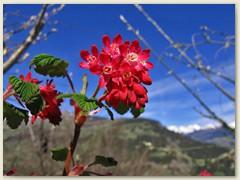 20 Blumen und Sträucher beginnen zu blühen