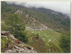 08_Die Gebäuden auf der Alpe Nimi 1728 m verschmelzen mit dem steinigen Gelände