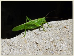 23_Der grüne Kerl ist davongekommen