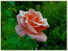 26_Im Juli, ab und zu Regen