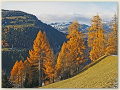42_Goldgelber Herbst