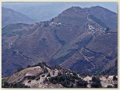 19 Terrassenförmige Landschaft, gepflanzt wird Mais und Weizen
