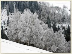 14_28. Februar 2018 Tannenwald bei Fieu