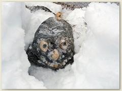 15_Ein kleines Ungehäuer versteckt im Schnee