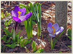 04_April - Auf 1300 m der Frühling erwacht