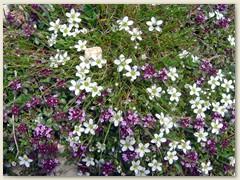 66_Flora am Wegrand