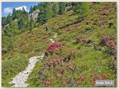 80_Alpenrosengarten im Turon Tal