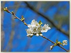 03_März 2020 - Frühlingsblüten