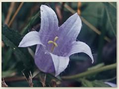 22r Auch eine Blume