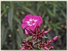 23r Eine weitere Blume
