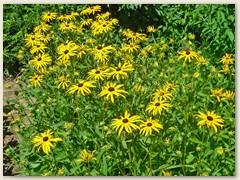 46r Blumenbeet