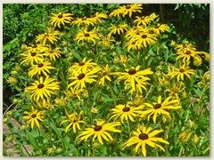 47r Blumenbeet