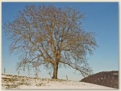 02_Februar 2015 - Schneemangel im Jura