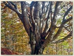 09 Ein alter Baum am Wegrand