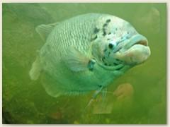 34.1_Fisch