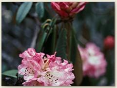 59 Die Blüten, eine Farbenpracht