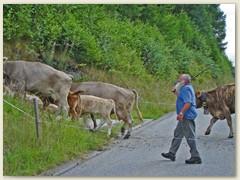 20 Das Vieh weidet ob dem Chalet