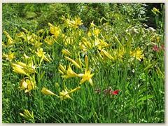 27 Ein gelbes Blumenmeer