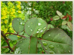 30 Bis Ende Juni viel Regen