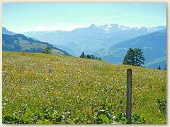 15 Immer wieder treffen wir auf prächtige Wiesen- und Alpblumen